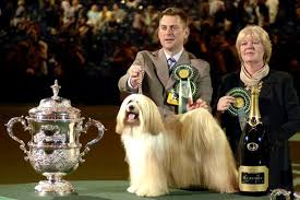 affenpinscher crufts 2016 dog pics from crufts big or small every type of dog can win the