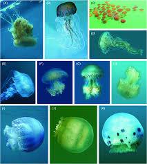 csiro publishing invertebrate systematics