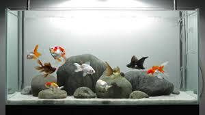 types of aquarium download fancy aquarium buybrinkhomes com
