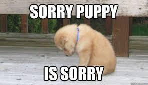 Sorry Memes - sorry puppy memes quickmeme