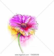 gerbera colors abstract watercolor painting image photo bigstock