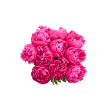 peony bouquet fuchsia peony bouquet peony bouquets gifts flower muse
