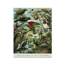 home design store nz native birds of nz a2 print gifts for home from the vault design