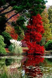 995 best flowers gardens u0026 trees in europe images on pinterest