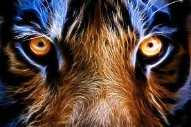quotes about eye of the tiger 46 quotes