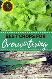 best vegetables for overwintering family food garden