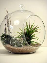 99 best air plant terrarium images on pinterest air plants air