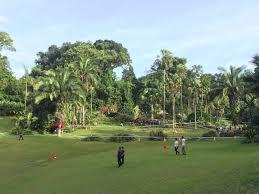 Botanical Gardens In Singapore by Singapore Botanic Garden U0027s Giant Tree Fell 4 Injured 1 Dead