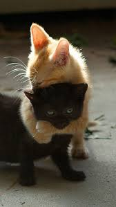 1015 best cutie images on pinterest baby animals backyard and