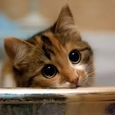 Sad Kitty Meme - pictures of cute kitty cats matatarantula