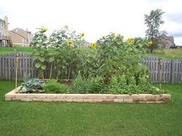 raised vegetable garden plans for texas the garden inspirations