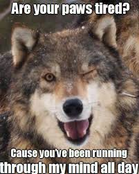 Wolf Memes - cool wolf stuff crazy for wolves