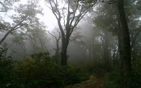 wallpaper tumblr forest foggy forest background tumblr 8 background check all