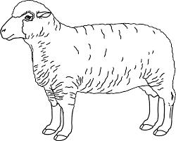 realistic sheep coloring wecoloringpage