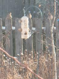 the great backyard bird count the dirt