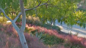 desert gardening ornamental grasses improve a landscape
