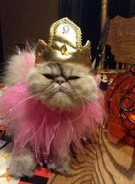 Persian Halloween Costumes 5 Halloween Costume Ideas Persian Cats Purrs Grrs