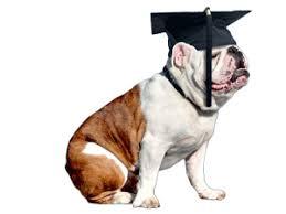 dog graduation cap and gown cap gown yale commencement