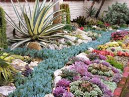 succulent garden designs 35 indoor and outdoor succulent garden