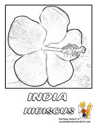 india hibiscus flower coloring page free flourishing flower