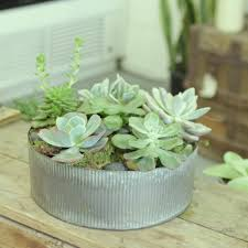 rustic succulent garden by gaia flowers plants and gifts