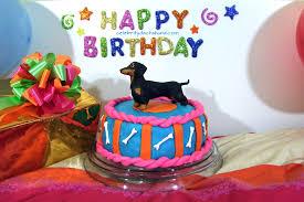best birthday week ever crusoe the celebrity dachshund