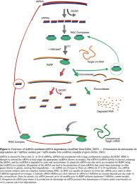 Viroid Diseases In Plants - plant rna viroid relationship a complex host pathogen interaction