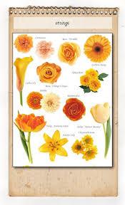 Orange Colors Names 201 Best Flower Names U0026 Colors Images On Pinterest Flowers