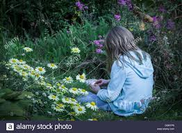 flowers in garden images a sitting with flowers in a garden stock photo royalty free