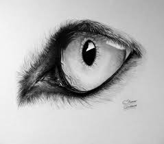 realistic wolf eye drawing by lethalchris on deviantart