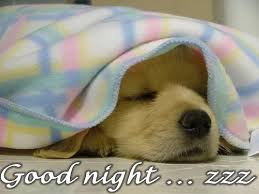 Goodnight Meme Cute - funny goodnight images good night hello s good mornings and