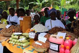 chambre regionale agriculture centrafrique vers la relance de la chambre régionale d agriculture