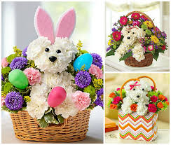 dog flower arrangement discounts on easter flowers and plants special design for dog