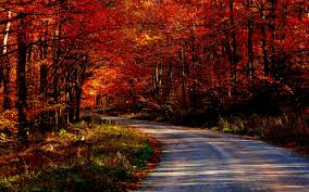 landscapes roads background forest trees wallpapers jpg 2560 1600 landscapes roads background forest trees wallpapers jpg 2560