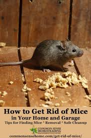 How Do I Get Rid Of My Old Sofa The Best Ways Get Rid Of Mice In Your House And Garage