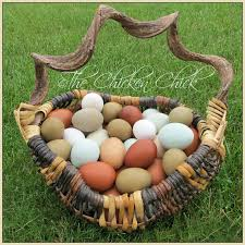 the chicken handling and storage of fresh eggs from