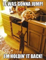 Thanksgiving Cat Meme - lol smart cat funny pinterest cat cat jokes and animal humour