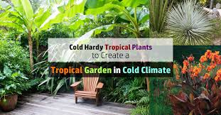Weather Zones For Gardening - 14 cold hardy tropical plants to create a tropical garden in cold