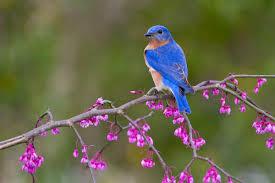 birds of b i r d s audubon south carolina