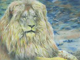 beautiful creatures grayscale coloring book lion coloring