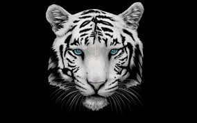 white tiger wallpaper android apps on play