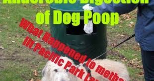 Dog Poop Meme - anaerobic digestion news anaerobic digestion of dog poop fuelled a