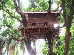 file tree house jpg file tree house at natore rajbari jpg wikimedia commons