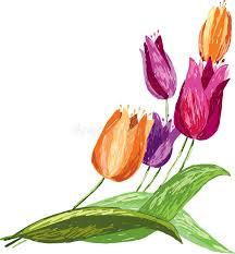 tulips sketch stock photo image 48640329