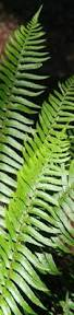 plants native to oregon the wild garden hansen u0027s northwest native plant database