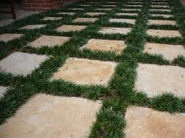 modern backyard pavers with ground cover plants ground cover