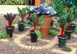 Vegetable Gardening In Pots by Container Vegetable Garden On Patio Plant U0026 Flower Stock