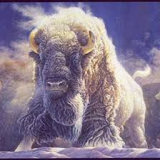 Titta noga, en stor vit buffel!