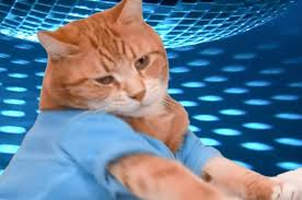 Keyboard Cat Meme - the iconic second keyboard cat has died and people are distraught