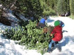 Cutting Christmas Tree - christmas tree cutting permits on sale in lincoln national forest
